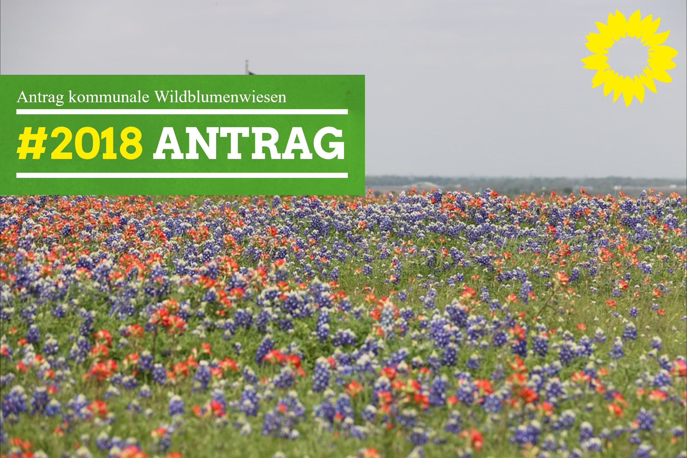 Antrag kommunale Wildblumenwiesen
